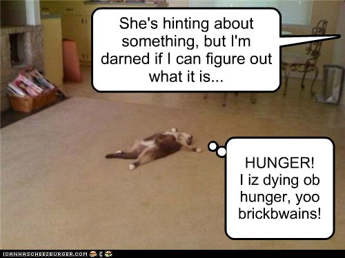 carpet cat ded die food hungry lay lolcat nom starving - 6057699328