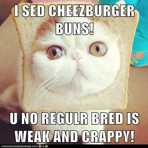 Cheezburger Image 6057854208