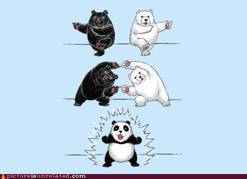 bears,best of week,fusion,panda,wtf