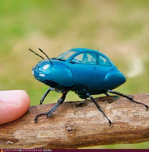 Real Beetle