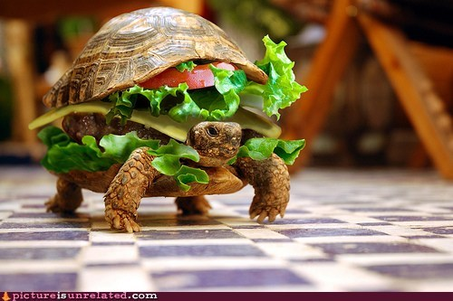 animals,cheezburgers,i like turtles,wtf