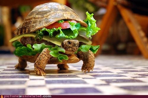 animals cheezburgers i like turtles wtf - 6057893888