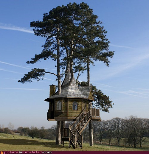 home tree house wtf