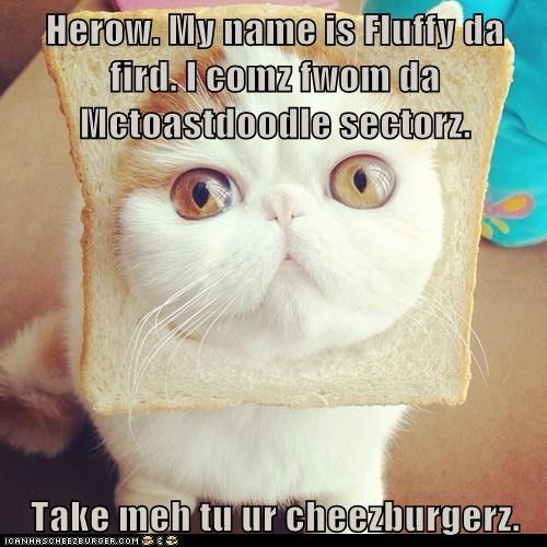 Cheezburger Image 6058529536