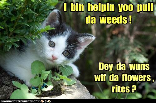 I bin helpin yoo pull da weeds ! Dey da wuns wif da flowers , rites ?