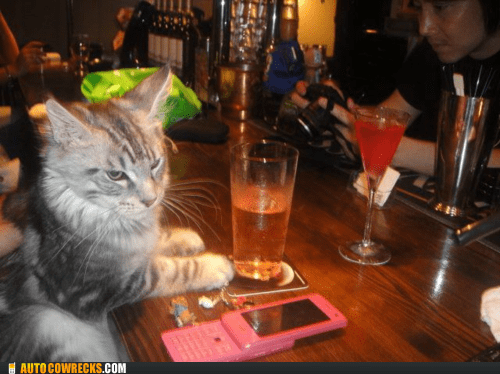 bar cat crunk critters phone - 6058939648
