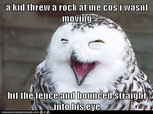 bounce eye hit karma kids laugh laughing mean Owl rock - 6059538176