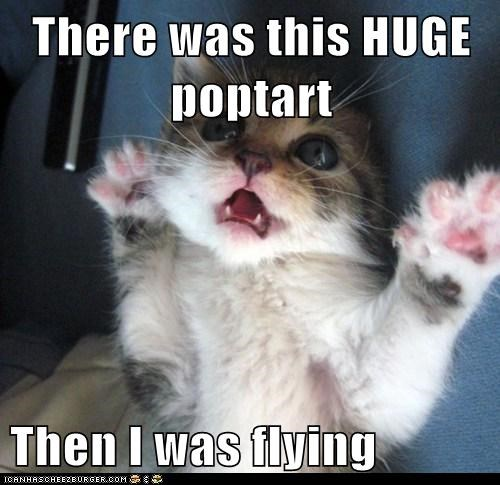 cat Cats dream dreams flying Hall of Fame kitten lolcat Memes nyan Nyan Cat surprised WoW - 6059900928
