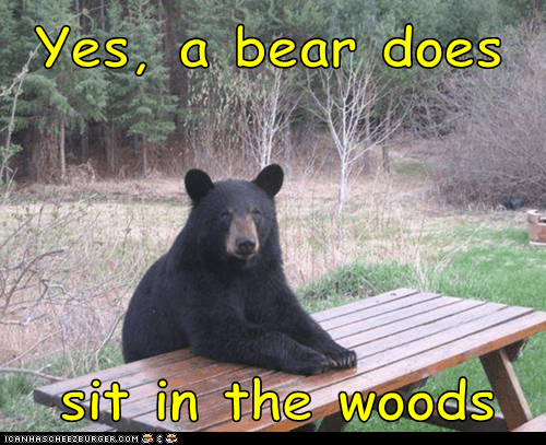 bear,saying,sit,woods,wrong,yes