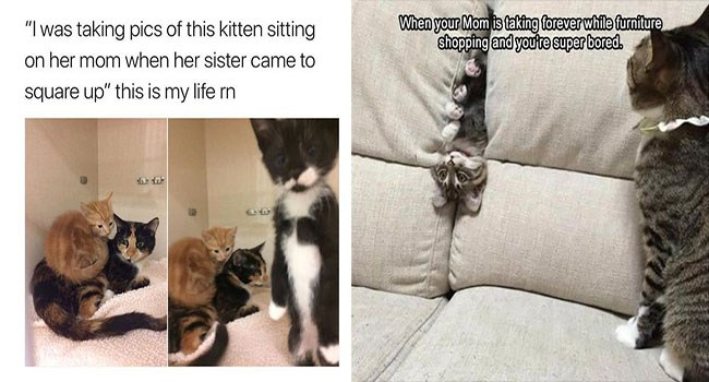 funny kittens meowing kitten cute lol meow cute kittens funny lolcats cute memes icanhascheezburger funny memes