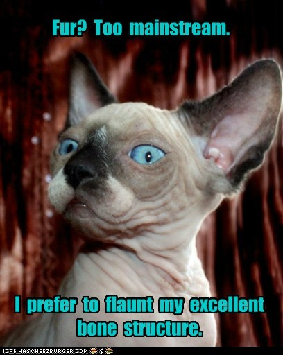 beauty cat face fashion hairless Hall of Fame lolcat model sphinx - 6060526080