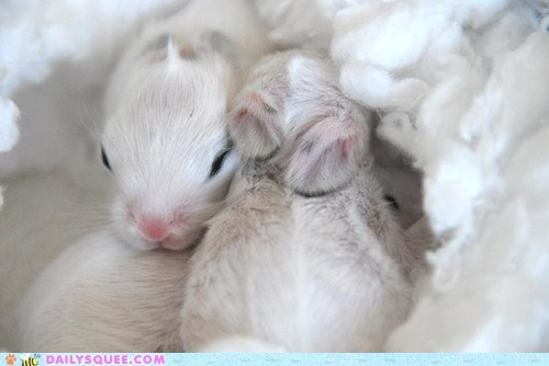 Babies bunnies bunny easter tiny white - 6060619008