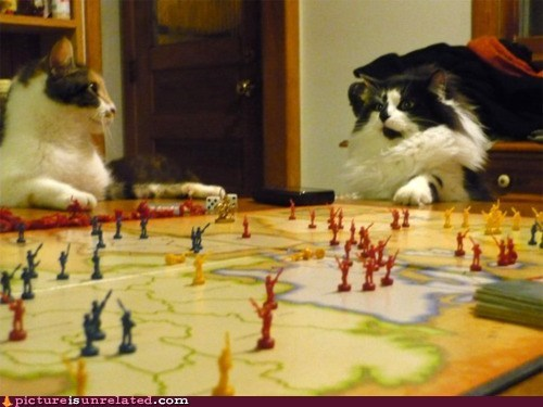 best of week board games Cats risk wtf - 6060812032