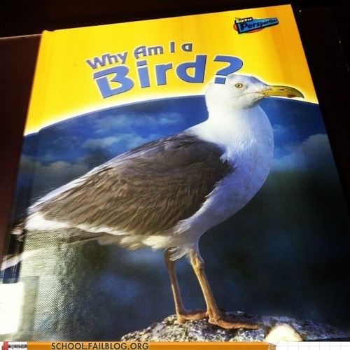birds g rated philososeagull School of FAIL textbooks why am i a bird - 6060938496