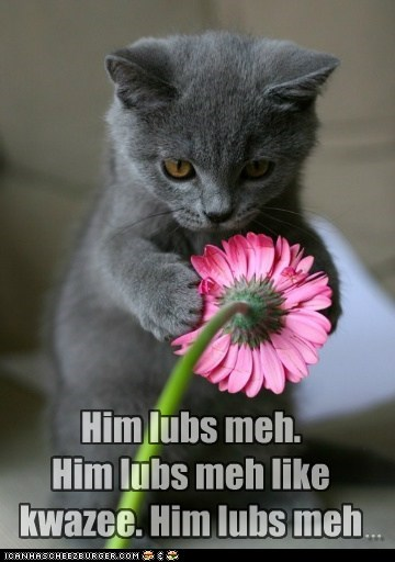 cat,Flower,future,lolcat,love,romance