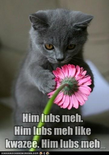 cat Flower future lolcat love romance - 6060991744