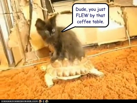 cat coffee table dude fast flew maniac ride running scared turtle