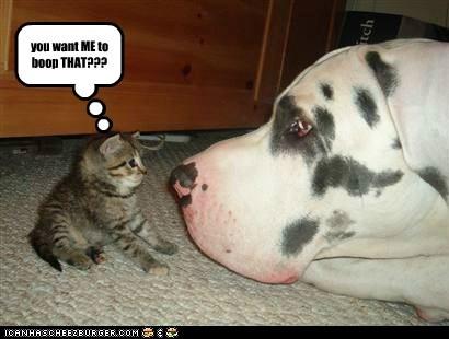 big boop cat great dane huge lolcat nose small - 6061169408