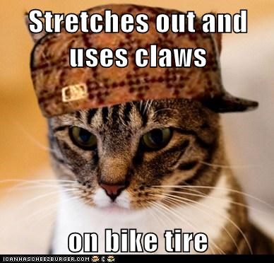 Cool Cat Craig,Scumbag Cat