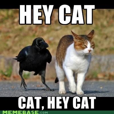 annoyance birds cat Memes - 6061307136
