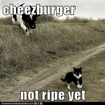 Cheezburger Image 6061509888