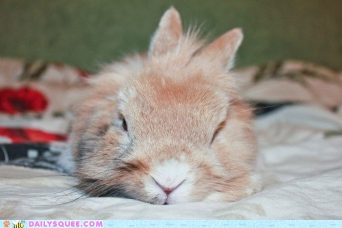bunny,candy,easter,sleep