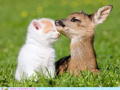 deer,grass,Interspecies Love,kitten,kitty,nuzzle