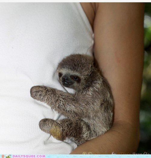 baby hang hug hugging omg shirt sloth sloths squee - 6061683968