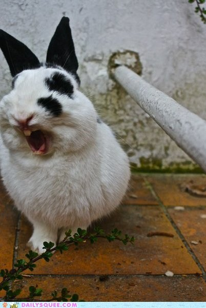 bunnies bunny ground mouth mouth open pipe rabbit rabbits yawn yawning - 6061684736