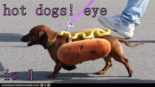 Cheezburger Image 6061834240