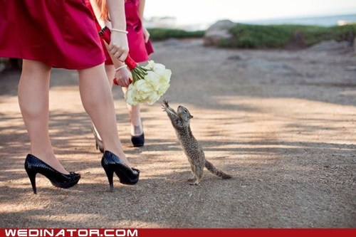 bouquet,catch,flowers,funny wedding photos,squirrel,wedding
