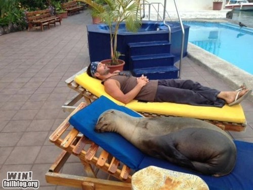 awww,nap,pool,seal