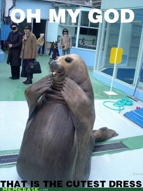animals,dress,Memes,oh my god,seal