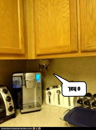 cabinet cat Cats Hall of Fame hang kitchen lolcat ohai upside down - 6062171648