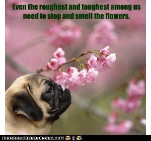 Even the roughest and toughest among us need to stop and smell the flowers.