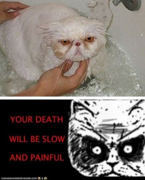 angry,bath,bathing,baths,Cats,Death,multipanel,painful,Rage Comics,slow,threats