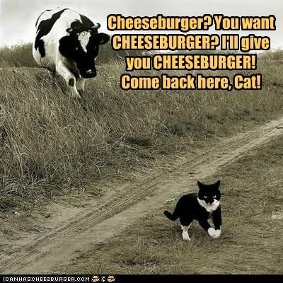 angry Cats chasing cheeseburger cows - 6062944000