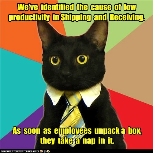 boxes,Business Cat,cardboard box,Hall of Fame,Memes,naps,productivity,shipping