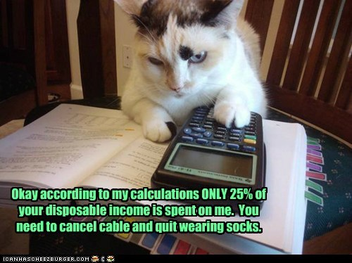budget calculator cat Cats economy Hall of Fame lolcat math money smart - 6064546304