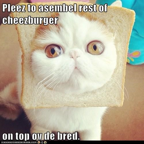bread cat cheezburger face hungry lolcat nom stare - 6064608000