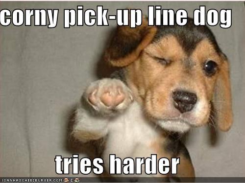 beagle cute puppy - 606465280