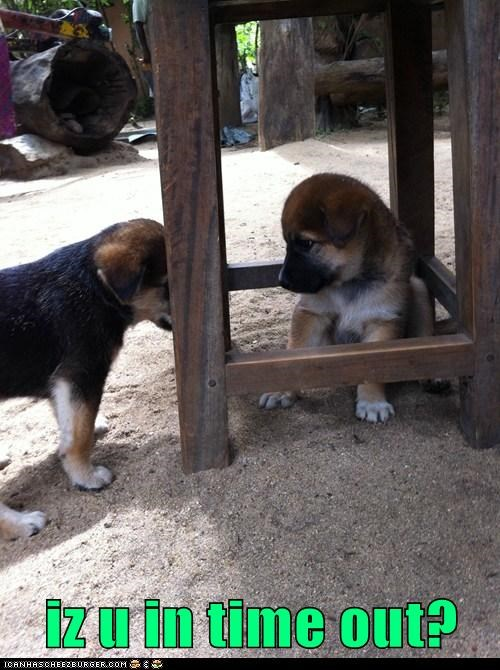 puppies,time out,what breed