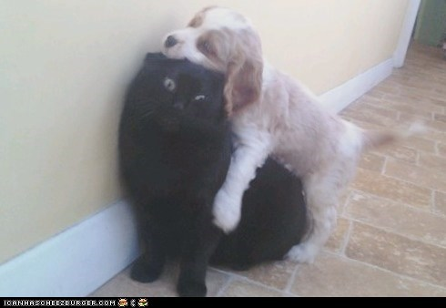 Awkward,Cats,dogs,goggies r owr friends,hugging,hugs,humping