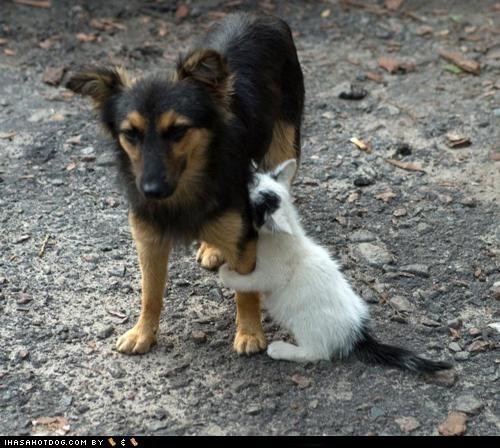 cat dogs hug kittehs r owr friends - 6065044224