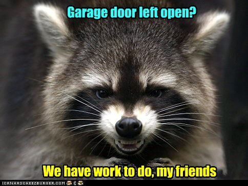 door,evil,friends,garage,mwahaha,open,raccoon,scheming,work