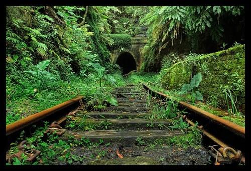 jungle railroad train - 6065142528