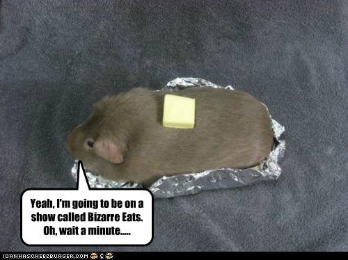 bizzare eats food guinea pig tv show wait a minute - 6065370880