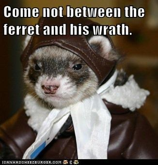 Come not between the ferret and his wrath.