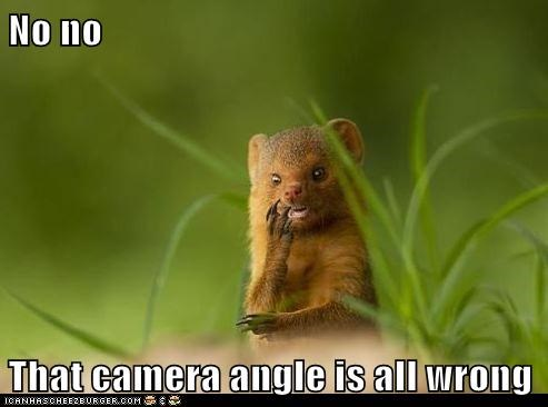 angle,camera,mongoose,no,photographer,wrong