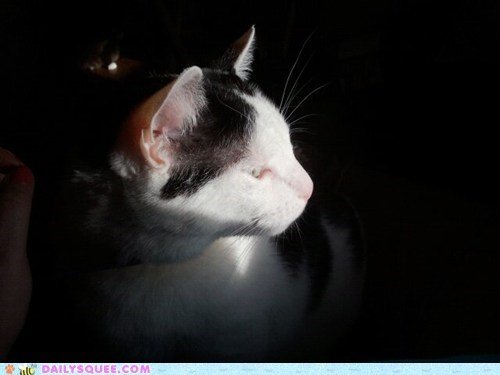 cat face pets reader squees sunlight - 6065746176